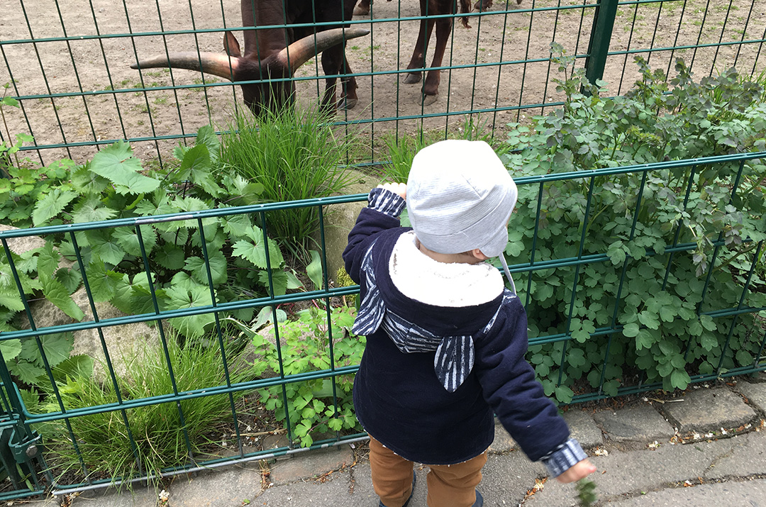 Eine Zebrabert Zippbert im Zoo